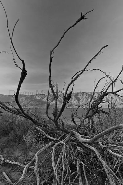 Dry times.  Anza-Borrego Desert State Park, California.
