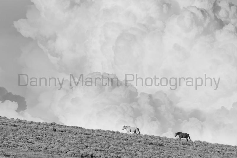 Horses and storm cloud<br /> North Park, Colorado.
