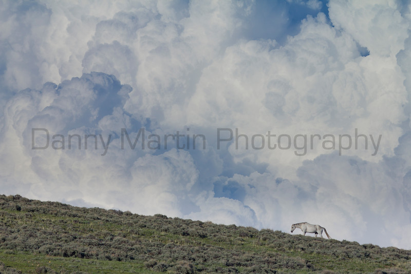 Horse and storm cloud<br /> North Park, Colorado.