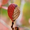 Tiny autumn leaf