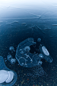 Frozen Fish Art