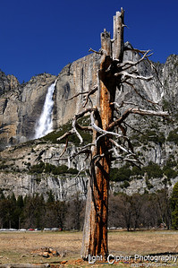 Dead Tree with Upper Falls