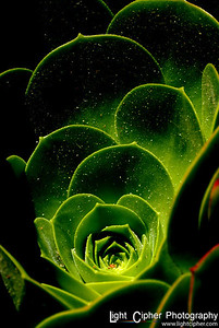 "Cactus in Contrast 1st Place -- category ""color"" Manteca Photo Contest and Show http://cameraclubmanteca.blogspot.com/"