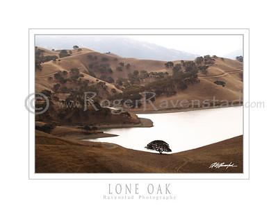 "18X24 Poster: ""LONE OAK"" $49.95"