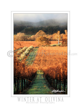 "18X24 Poster: ""WINTER AT OLIVINA""   $49.95"