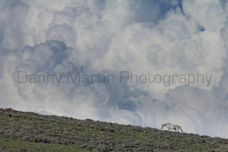 Horse and storm clouds<br /> North Park, Jackson County, Colorado