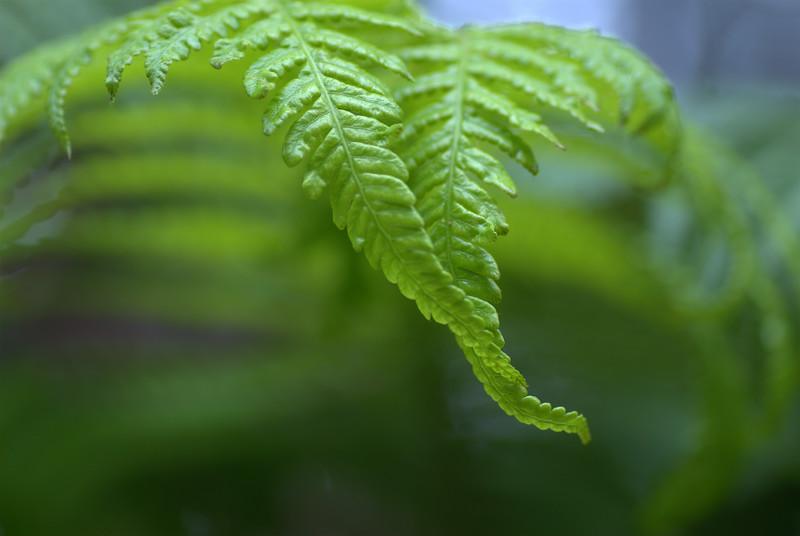 nestled ferns