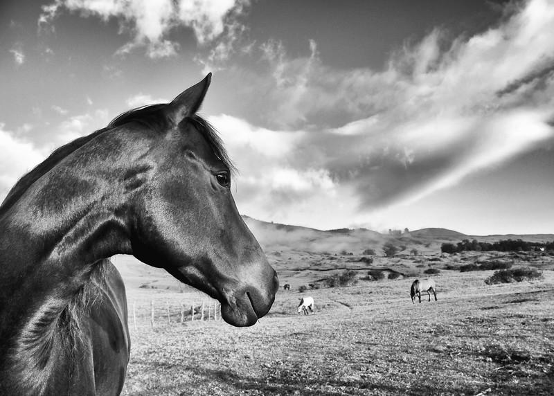 Maui-Photographers-Aubrey-Hord-004