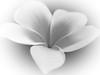 Plumeria BW rev  (2 of 1)-12