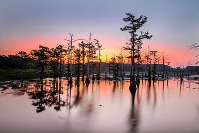 untitled-1154-Sunrise with Alligator