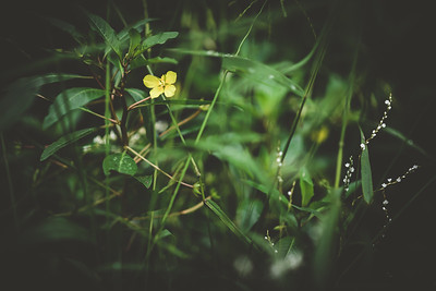 Cluster ©DianaSherblomPhotography