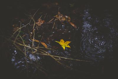 Fallen ©DianaSherblomPhotography-169