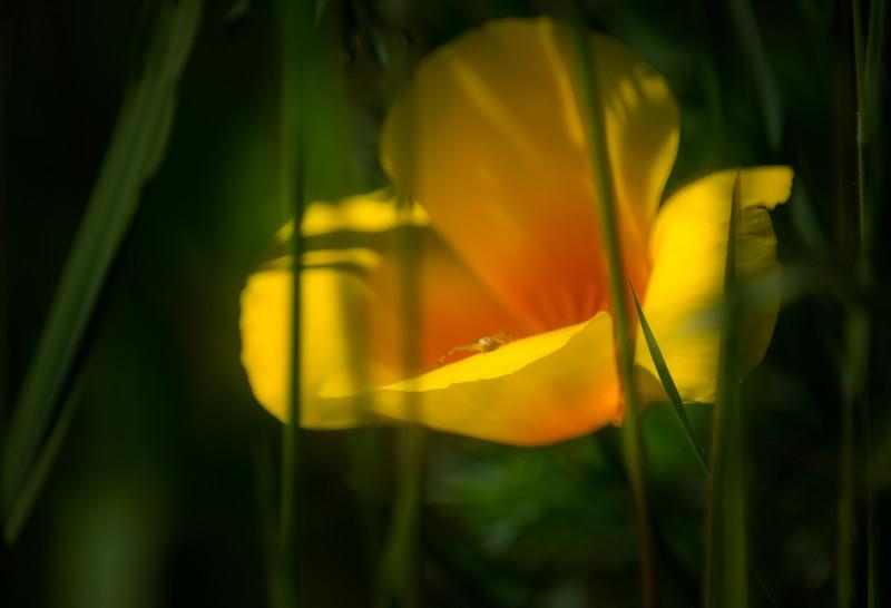 Botanical Revery