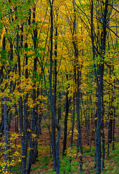 Forest Color; Hiawatha NF