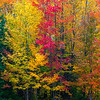Fall Color Sections; Hiawatha NF
