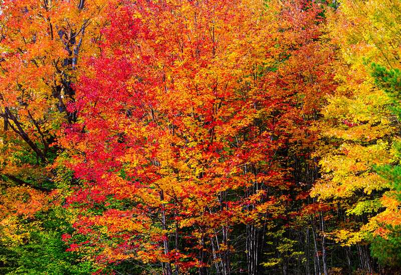 Hiawatha National Forest Color