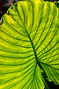 Frond of You