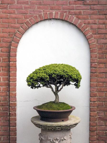 Bonzai Tree with wall