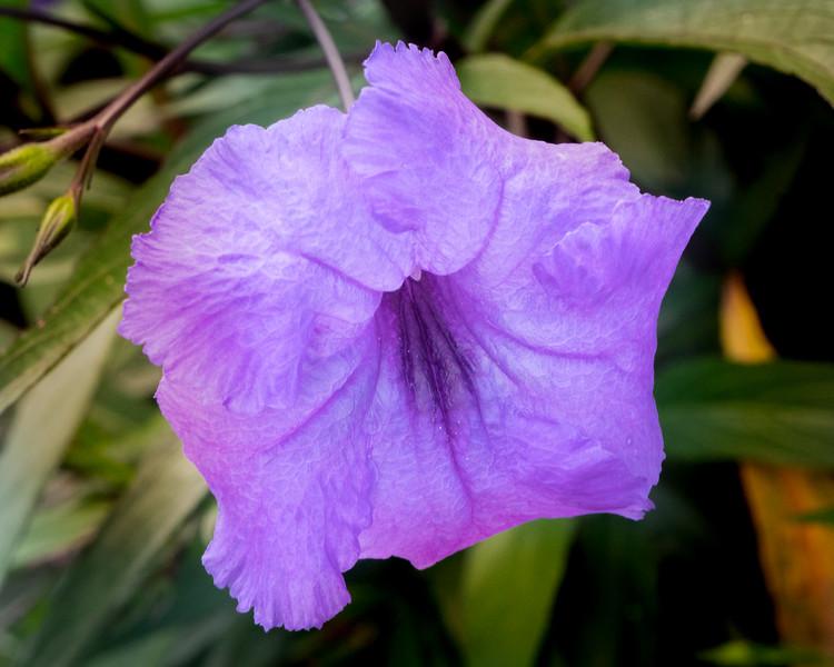 Purple pride