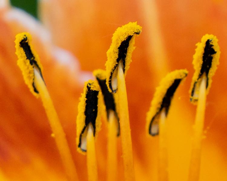 Guardians of orange