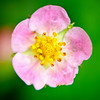 20100531_lensbabyflowers_0037-Edit-Edit