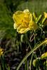 Flower-21a