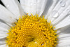 20100619_backyardflowers_0020