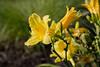 Flower-13a