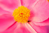 20100511_lensbabyflowers_0023-Edit-2