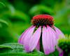 20100612_flowersafterrain_0020