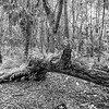 James Island County Park, the forest