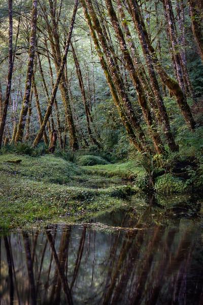 Quinault Forest, Washington