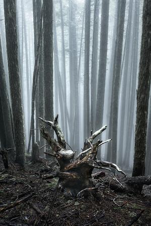 Warlock Wood