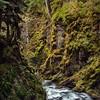 Mossy Gorge