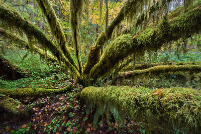 Expanded Moss