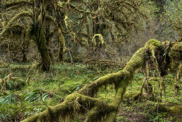 Eerie Grove
