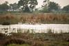 lagoon lechwe runaway