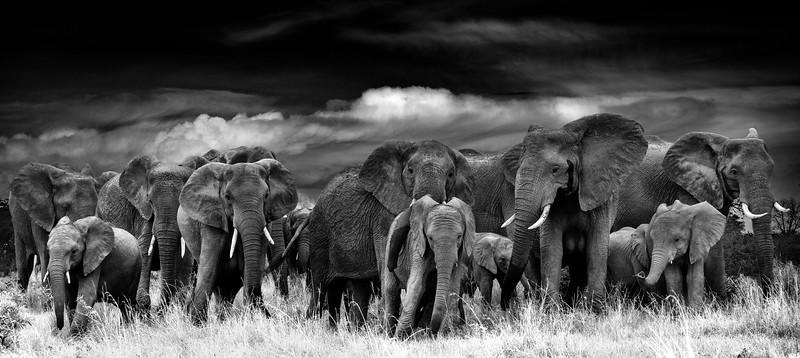 ELEPHANT THUNDER43x96