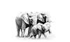 lebala elephant family bw