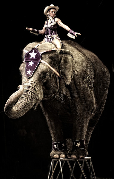 elephant1 2