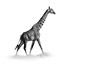 giraffe ISO 2