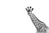 giraffe ISO 1