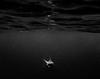 sharkheadon