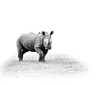 RhinoISO 1
