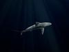 sharkrays 2