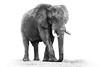 elephant ISO 3