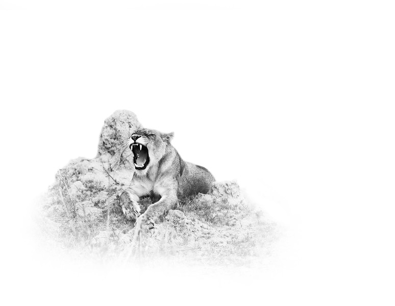 lion ISO 1