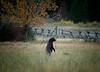 blackbear1