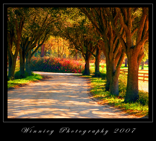 Oak covered drive oil paint gallery print
