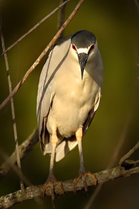 gatorland bird
